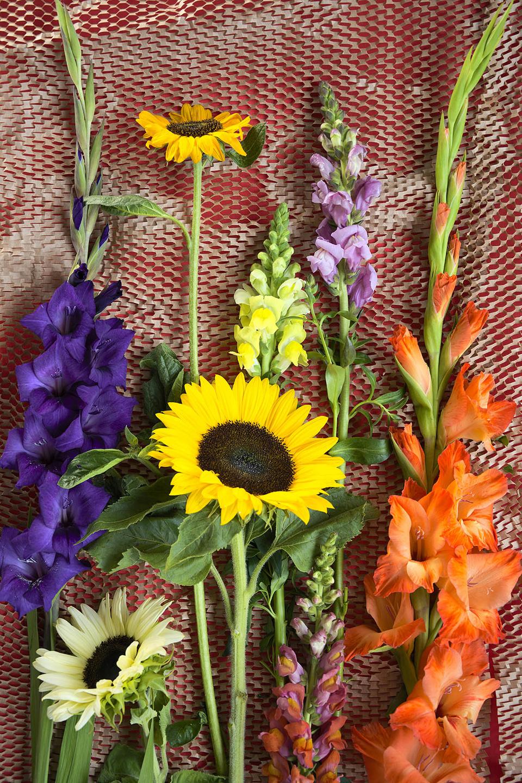 Sommerblumen Sonnenblumen Gladiolen Löwenmäulchen